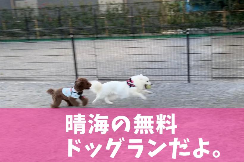 晴海臨海公園わんわん広場(ドッグラン)