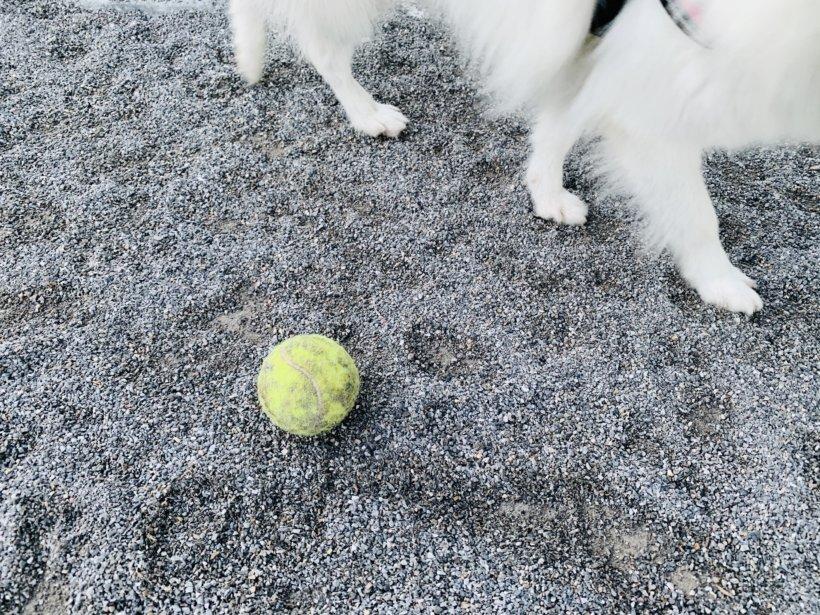 ボールが落ちてます